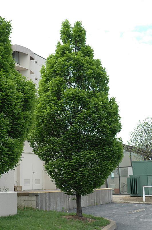 Mature tree nursery ontario can suggest