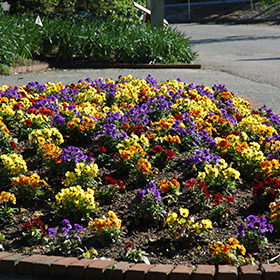Bedding Plant Photo