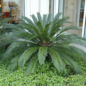 Palm and Cycad Photo